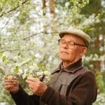 Elderly man working in a garden — Stock Photo