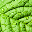 Green leaf texture with water drops — Stock Photo