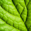 Royalty-Free Stock Photo: Green leaf texture