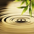 Fresh bamboo leaves over water — Stock fotografie