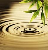 Hojas de bambú fresco sobre el agua — Foto de Stock