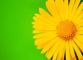 Yellow flower close-up shot — Stock Photo