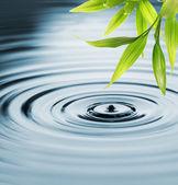 Färsk bambu lämnar över vatten — Stockfoto