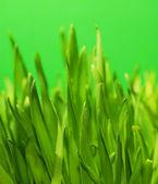 Herbe verte fraîche — Photo