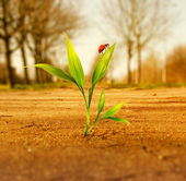 Green grass growing through dry soil — Stock Photo