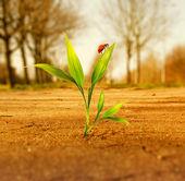 Green grass growing through dry soil — Stock Photo