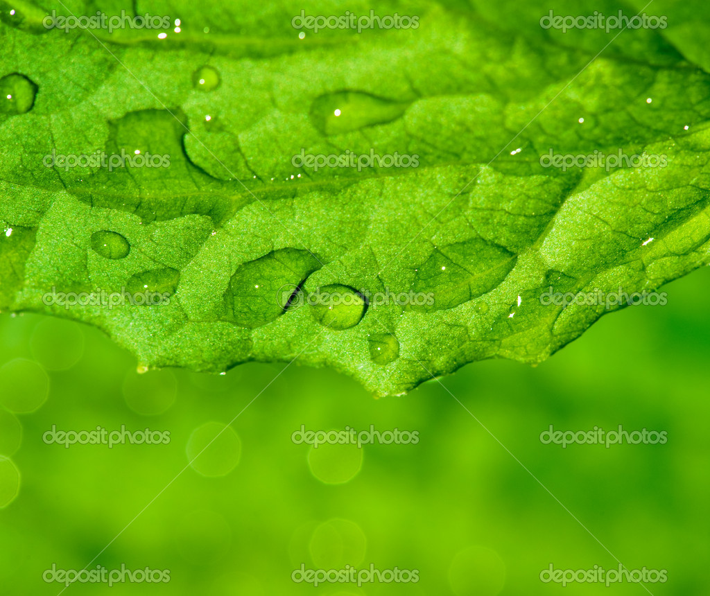 Green leaf texture with water drops on it — Stock Photo #1741050