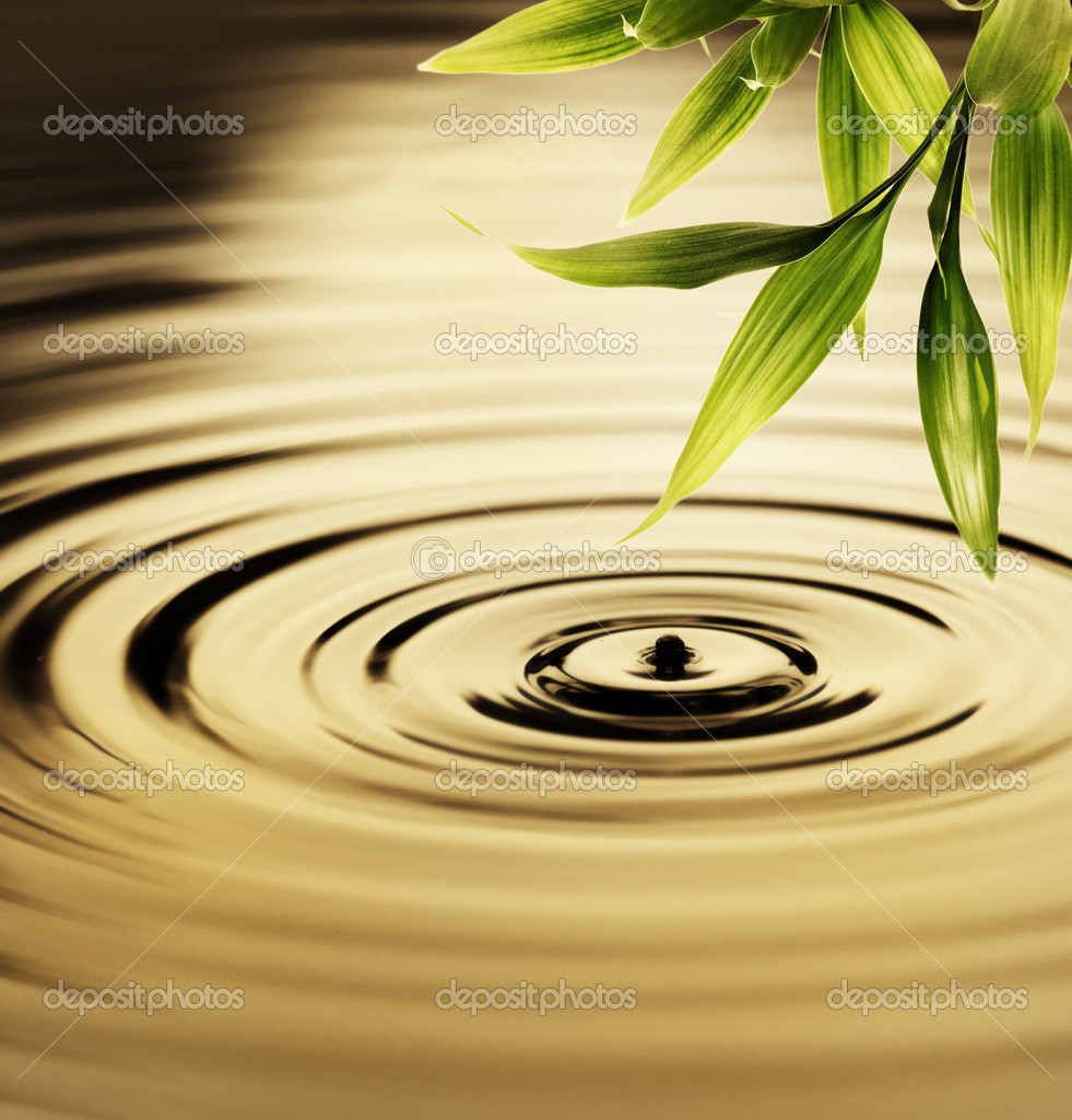 Fresh bamboo leaves over water — Stock Photo #1741195