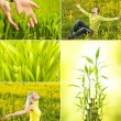 Spring collage — Stock Photo #2082236