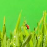 Ladybug sitting on a green grass — Stock Photo