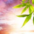 Bamboo leaves over clody background — Stock Photo