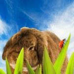隐藏在草丛中的兔 — 图库照片