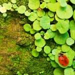 Ladybug sitting on a green grass — Stock Photo #2084686