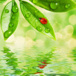Green leaves reflected in water — Stock Photo