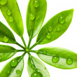 Water drops on fresh green leaves — Stock Photo