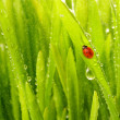 Close-up shot of green grass - Stock Photo