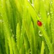närbild av grönt gräs — Stockfoto