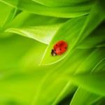 坐在新鲜的青草上的瓢虫 — 图库照片