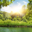 Stock Photo: Sunshine in a forest