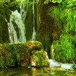 Stock Photo: Waterfall in the forest