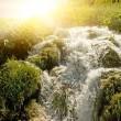 Stock Photo: Sunrise over waterfall in wild forest
