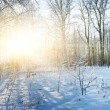 Stock Photo: Winter forest scenic