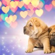 Two shar-pei puppies in love — Stock Photo