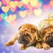 Two shar-pei puppies in love — Stock Photo #2087363