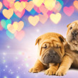 Royalty-Free Stock Photo: Two shar-pei puppies in love
