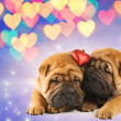 Two shar-pei puppies in love — Stock Photo #2087393