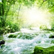 Sunshine in a forest - Stock Photo
