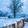 Beautiful winter scenic — Stock Photo