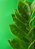 Folhas verdes frescas — Fotografia Stock