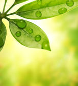 Green leaf over blurred background — Stock Photo