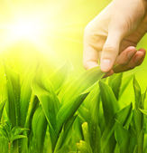 Human hand touching green grass — Stock Photo