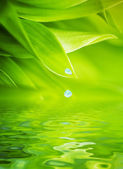 Water drops falling from a leaf of grass — Stock Photo