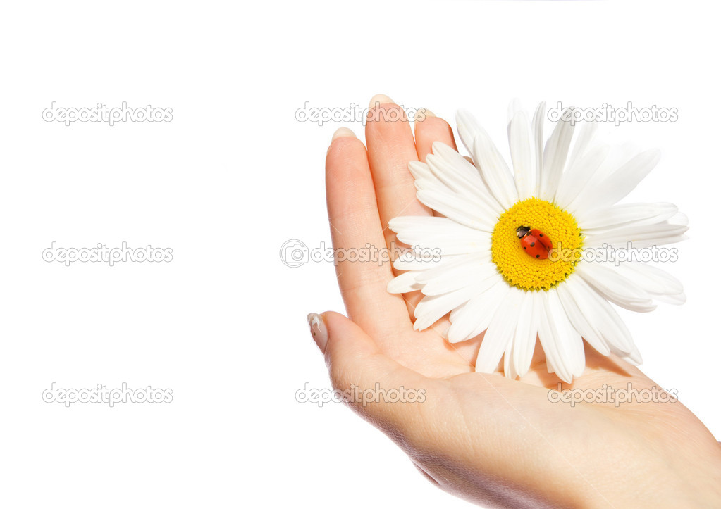 Human hand holding daisy with ladybug on it — Stock Photo #2085125