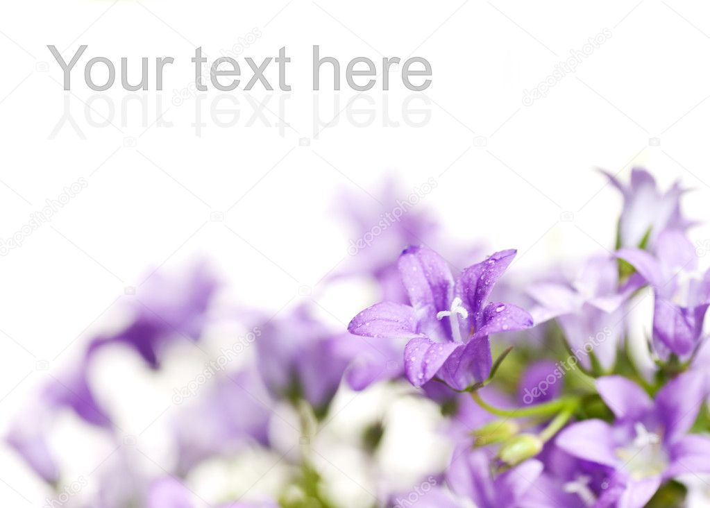 Beautiful fresh flowers over white background — Stock Photo #2086683