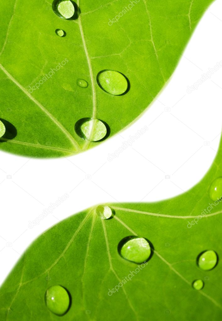 Green leaf with water drops on it — Stock Photo #2086867