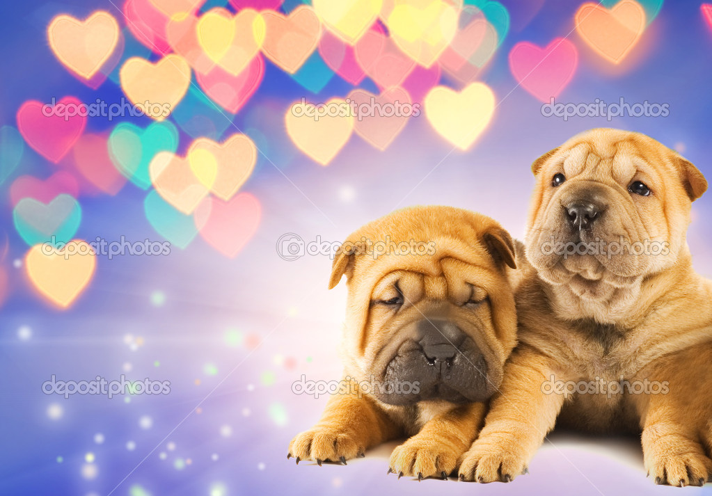 download shar pei puppies - photo #7