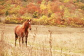 Free horse — Stock Photo