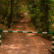 Barrier on road in autumn forest — Stock Photo