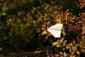 Paper plane in branches — Stock Photo