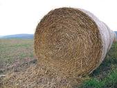 Roll of straw in field — Stock Photo