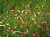 Leaves on a green grass — Stock Photo