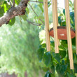 Stock Photo: Gold wind chimes