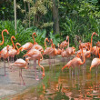 Flamingo paradise — Stock Photo
