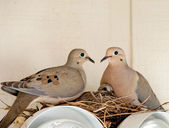 Two doves and a baby — Stock Photo