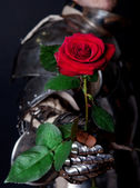 Knight holding a beautiful flower — Stock Photo
