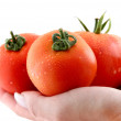 Three fresh red tomatoes — Stock Photo #1596621